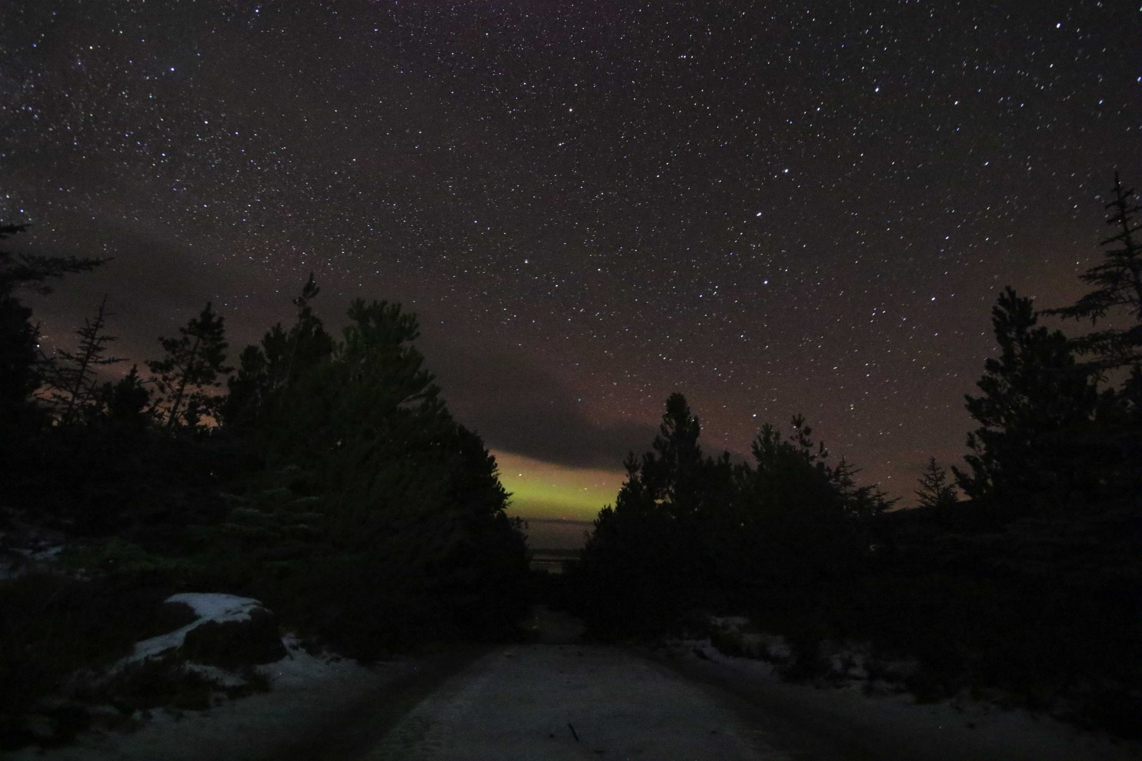 aurora borealis from the forest